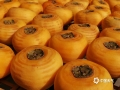 中国天气网广西站讯 10月以来,桂林市恭城县的柿子逐渐成熟,迎来采摘晾晒季。11月11日,当地果农趁着晴好天气开展柿子的采摘和晾晒工作。(图/马艺 文/黄归兰)