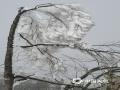 12月5日,环江毛南族自治县龙岩乡朝阁村万亩草甸出现难得一见的雾凇景观,整个草甸银装素裹,宛若冰雪童话世界。造型奇特的松树和灌木均已换上了冰清玉洁的妆容,宛如银花盛开;而满枝满树的冰桂,如玉菊怒放,雪莲盛开,又如珠帘长垂,美丽的景色也吸引了不少游客观赏拍照。(图文/覃东南)