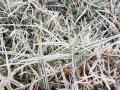 图为12日早晨,梧州市藤县出现霜冻天气。(图/苏少青)