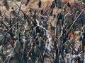 中国天气网广西站讯 1月12-13日,受强冷空气和晴空辐射降温影响,贵港连续两日出现霜冻,致使砂糖橘、沃柑、火龙果等作物出现不同程度的霜冻灾害。其中,砂糖橘受冻害影响减产、品质受损,火龙果、芋头、土豆出现不同程度的冻伤。(文/李婷 图/蒙金凤)