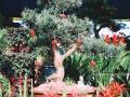 """广西新闻网南宁1月19日讯(记者 韦幸文 罗珊珊 实习生 李婷)距离春节越来越近,为给家里增添一些新的气息,不少市民已经开始逛花市、买年花、买盆栽。1月18-19日,记者走进南宁市花鸟市场、七星路一巷等花卉市场,发现年味渐浓,不少待售的年花、盆栽等都被商家挂上了红包、贺卡等装饰物,似乎寓意着新年红红火火,在图一个新春的""""好彩头""""。"""