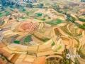 中国天气网讯 近日,广西南宁持续晴朗天气,农民朋友抓住有利时机开展春耕。(图/曾海科)