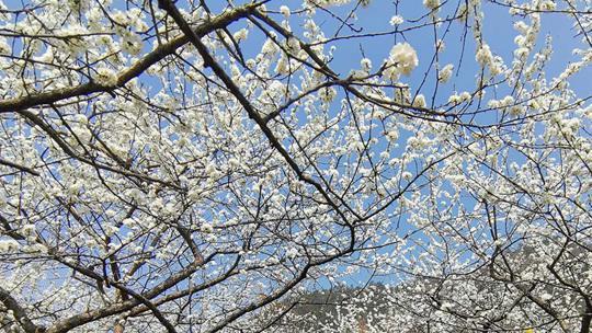 广西境内春暖百花开