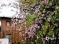 中国天气网广西站讯 3月2日,柳州天气晴好,露出了近日难得的阳光,28万株紫荆花盛放在龙城的大街小巷,一片春暖花开的景象。一朵朵粉红娇俏的紫荆花点缀在枝头,远远望去,粉红与绿叶交织,美得让人陶醉不已。(图文/李宜爽)