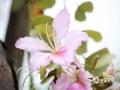 中国天气网讯 3月4日,在广西防城港市的马路边儿上,细雨蒙蒙中紫荆花竞相绽放,缤纷多姿的花朵扮美了城市的街景。(图文/韦樊妮)