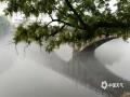 中国天气网广西站讯 3月30日清晨,灵川县潭下镇甘棠江面浮起一层白雾,宛如一条白纱漂浮在江面上方、若隐若现。江面雾气缭绕的景象,引得不少来往民众驻足拍照。据气象专家介绍,水面雾气缭绕是由于江面水汽蒸发遇冷凝结为小水珠,形成雾气笼罩在水面上。(文/邓苏花雨 图/宋琼)
