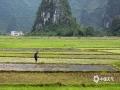 中国天气网广西站讯 谷雨过后,桂北春种正当时。4月25日,桂林田心村农人们犁田、插秧的景象,与远山相互映衬,构成一幅春日田园画卷。(文/唐莉梅 图/梁建平)