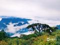 """中国天气网广西站讯 4月29日,在广西来宾市金秀县,有着""""广西第五高峰""""""""桂中第一高峰""""之称的的圣堂山上,云雾缭绕在山头,云海景色非常壮美。五一假期即将到来,大家不妨到这里来观云海和日出。(图/姜新柒 文/苏庆红)"""