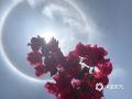 """图为5月1日百色西林天空惊现""""日晕""""奇观。(图/他文波)"""