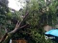图为4日桂林市灵川一小区树木倒伏,压到民房。(图/林政)