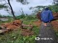 图为4日柳州市融水县融水镇小荣村树木倒伏。(图/蓝求)