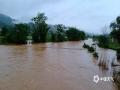 图为4日柳州市鹿寨中渡镇黄腊村洪水淹至树腰。(图/蓝求)