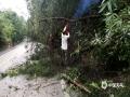 图为4日柳州市三江国道边树木倒伏。(图/蓝求)