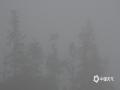 中国天气网广西站讯 今天(7日)早晨,一场春雨过后,因空气湿度较大,夜间气温较低,百色市隆林县新州镇的寒山、弄桑、么窝等高海拔山区出现了大雾天气,最低能见度仅200米左右,山坳水汽充足的地方能见度更低。山区大雾的出现给驾车出行带来了不利影响。(图文/尹华军)