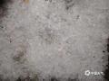 受高空槽和偏南气流共同影响,5月7-9日,凌云县连续出现强对流天气。8日晚23时47分,凌云县沙里乡遭遇短时雷暴大风、冰雹等袭击,最大冰雹直径超过20毫米且密度大,过程持续时间接近15分钟。在沙里乡沙里村大坝,烟叶等农作物和部分建筑物均受损严重。(文/杨少秋  图/陆启祯)
