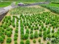 中国天气网广西站讯 5月11日晚起至12日早上,广西北部的桂林、柳州、河池出现强降雨天气,部分地区降下大到暴雨乃至大暴雨,局地特大暴雨!柳州市融安县长安镇12小时雨量达到258.7毫米!强降雨导致部分地区积水严重、交通出行受阻,树木倒伏、农作物受损,有的地区甚至出现山体塌方,导致道路中断。图为罗城乔善农作物被淹。(图/韦毅 文/卿跃文 何正令 秦晓翠 蒋熙)