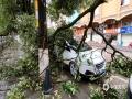 昨天(12日)夜间到今天白天,广西部分地区出现大到暴雨,局部大暴雨,并伴有雷暴、大风等强对流天气。强降雨造成河水上涨,城市内涝等次生灾害。 图为都安县城出现大风,路边树木被吹断压坏车辆。(图/唐新)