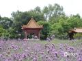 中国天气网讯 近日,柳州天气晴好,市雀儿山公园的马鞭草竞相开放,吸引了不少游客前来打卡、拍照。(图文/韦莉)
