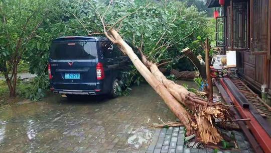 巴马遭受疾风骤雨袭击