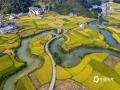 中国天气网讯 10月上旬,位于广西靖西的小山村平江村稻熟水美,蓝天映衬下金黄色的田野山环水绕,呈现出一幅幅美不胜收的田园画卷。(图文/曾海科)