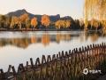 近日,河北承德已经进入到初冬时节。在避暑山庄内,园区树木的叶片已经全部变成了金黄色,映衬着阳光显得流金溢彩,十分漂亮。(图/穆瑞刚)