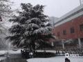 受冷空气和暖湿气流共同影响,13日夜间开始,河北全省大部地区出现降水天气,北部为降雪或雨夹雪,中南部为降雨。河北省气象台发布暴雪蓝色预警信号!预计14日下午到夜间,河北大部地区将出现雨雪天气,其中承德东部、唐山、秦皇岛有中到大雪,局地暴雪。图为14日早晨,河北廊坊三河出现降雪,道路湿滑。(图/李辉)