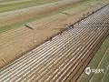 进入到三月中旬,河北的天气陆续回暖,各地春耕生产也来到大忙时期。在河北唐山遵化地区,当地马铃薯种植户就在这几天抓紧趁墒播种,作者也是用无人机记录下播种过程,从不同角度感受春耕春播的忙碌气息。无人机拍摄(图/刘满仓)