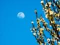 """4月7日夜晚到8時凌晨,今年最大的""""超級月亮""""在我國天空如約而至。在河北廊坊、唐山兩地,一輪明月懸掛天空,十分的美輪美奐。當地攝影愛好者也是通過二次曝光的方法,用相機記錄下這一瞬間。圖為河北廊坊三河燕郊(圖/李輝)"""