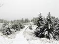 15日白天到16日上午,河北承德迎來一場明顯的降水天氣。其中在氣溫較低的壩上圍場縣,還出現了大范圍降雪。在圍場城區及塞罕壩林場,植被上的積雪已經厚厚一層,降雪量也普遍達小到中雪量級。由于前期氣溫回升氣候干燥,圍場及塞罕壩林區火險等級居高不下,此次降雪有效的增加了空氣濕度,緩解當地防火壓力。圖為圍場縣城區周邊(圖/司宏坡 孫閣)