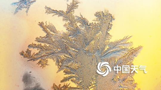 -20℃的美丽:低温天气下美丽的冰花