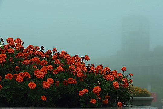四川广安:雾重賨城 晨景溶溶如幻
