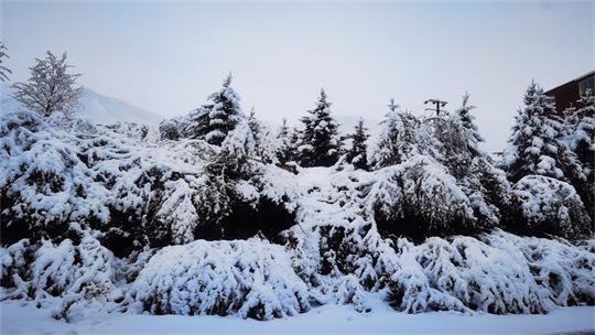 康定新城区白雪茫茫