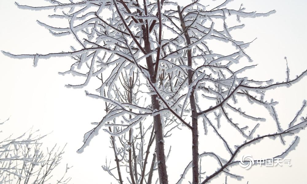 阿拉山口天气_新疆阿拉山口雾凇沆砀,上下一白-高清图集-中国天气网新疆站