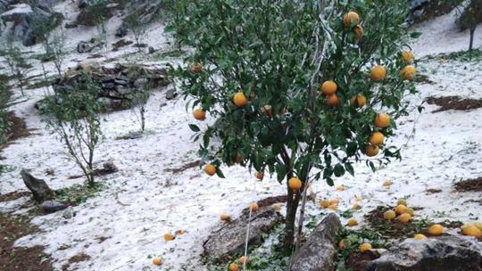 云南蒙自连续三天遭受冰雹袭击