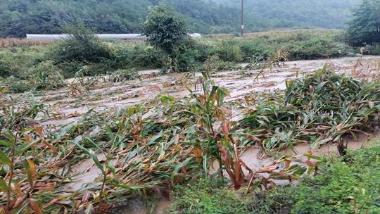 云南马龙出现强降雨天气 导致乡镇内涝多地农作物受损