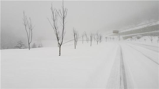 云南白马雪山现降雪 天地之间银装素裹