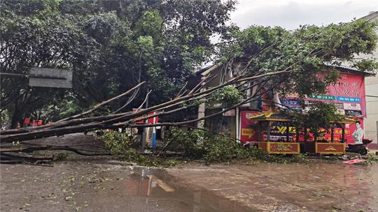 景谷县突发大风天气  部分路段大树倾倒