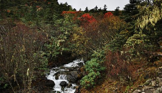 10月中旬哈巴雪山下的黑海湖边尽显高原的秋色