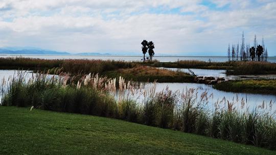 昆明的城市之肺---滇池湿地